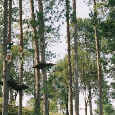 Arborismo / Tirolinas